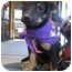 Photo 1 - Dachshund/Terrier (Unknown Type, Small) Mix Puppy for adoption in San Diego, California - Chole