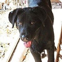 Adopt A Pet :: Tate - PENDING, in ME - kennebunkport, ME