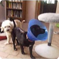 Adopt A Pet :: Salty - Chimayo, NM