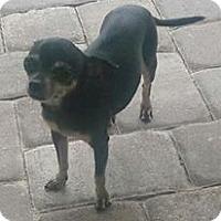 Adopt A Pet :: Sophie - geneva, FL