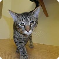 Adopt A Pet :: Rayon - Milwaukee, WI