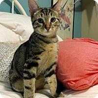 Adopt A Pet :: Lily - Morgantown, WV