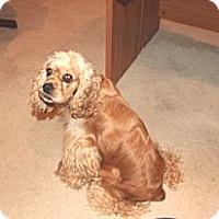 Adopt A Pet :: Ginger - Adopted! - Kannapolis, NC
