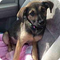 Adopt A Pet :: Anastasia (in adoption process - El Cajon, CA