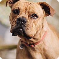 Adopt A Pet :: Marla Pooch - Portland, OR