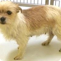 Adopt A Pet :: Violet-ADOPTION PENDING - Boulder, CO