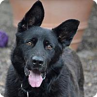 Adopt A Pet :: Sapa - Fairport, NY