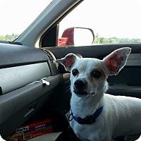 Adopt A Pet :: Wishbone - DuQuoin, IL