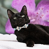 Adopt A Pet :: Rocket - Houston, TX