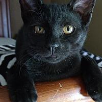 Adopt A Pet :: Gary - Killian, LA