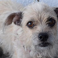 Adopt A Pet :: Missy - Los Angeles, CA