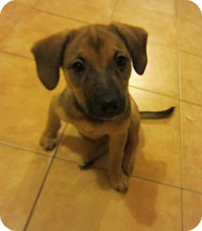 Terrier (Unknown Type, Medium) Mix Puppy for adoption in San Diego, California - Whoopi