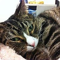 Adopt A Pet :: Sweetheart - Warminster, PA