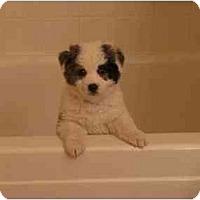 Adopt A Pet :: Elliott - Mesa, AZ