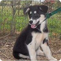 Adopt A Pet :: Bailey - Clayton, OH