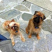 Adopt A Pet :: JAXX & BOOGIE in Montara, CA - Los Angeles, CA