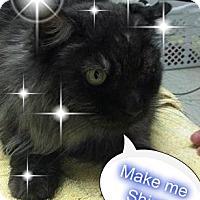 Adopt A Pet :: BINKY - ORPANED SENIOR SIBLING - Rochester, NY
