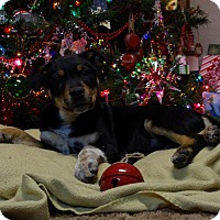 Adopt A Pet :: Nash - Staunton, VA