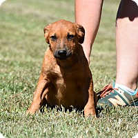 Adopt A Pet :: Maudie - South Dennis, MA
