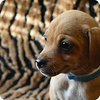 Adopt A Pet :: Aspen - North Brunswick, NJ