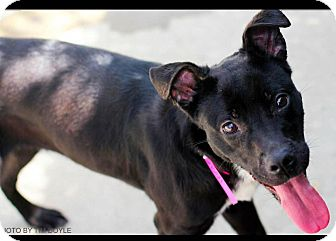 Terrier (Unknown Type, Medium)/Boxer Mix Dog for adoption in Goodlettsville, Tennessee - Princess