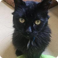 Adopt A Pet :: Tabitha - Chula Vista, CA
