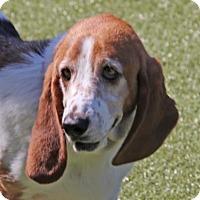 Adopt A Pet :: Bendy - Wichita, KS