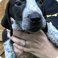 Adopt A Pet :: Omega (Danielle-Camden) - Blossvale, NY
