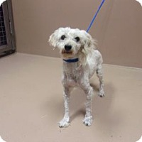 Adopt A Pet :: Steve - Reno, NV