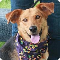 Adopt A Pet :: Tesla - Garfield Heights, OH
