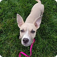 Adopt A Pet :: Moxie - Germantown, OH
