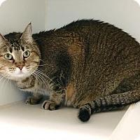 Adopt A Pet :: Chloe - Alvin, TX