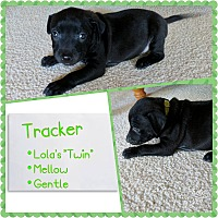 Adopt A Pet :: Tracker - Oviedo, FL