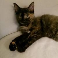 Adopt A Pet :: McGee - Richmond, VA