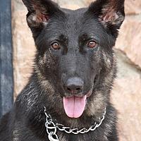 Adopt A Pet :: Holly von Hof - Los Angeles, CA