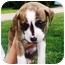 Photo 1 - Boxer Mix Puppy for adoption in Seneca, South Carolina - JAY JAY