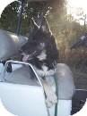 German Shepherd Dog Mix Dog for adoption in Quincy, Indiana - Enya