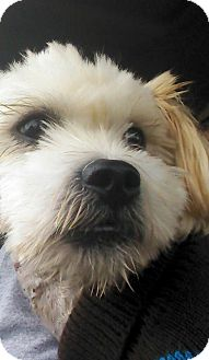 Terrier (Unknown Type, Small) Mix Dog for adoption in Arden, North Carolina - Moby