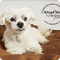 Adopt A Pet :: Pepita - Denver, CO