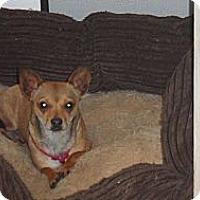 Adopt A Pet :: Lizzy - Seattle, WA