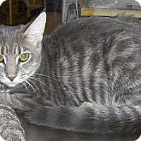 Adopt A Pet :: Nikki - Richmond, VA
