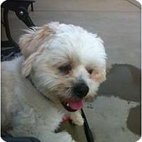 Adopt A Pet :: Teddy - Oceanside, CA