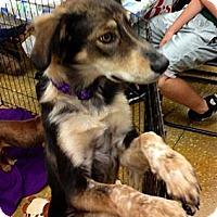 Adopt A Pet :: Ruby - Silsbee, TX