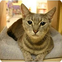 Adopt A Pet :: Cannolli - Jenkintown, PA