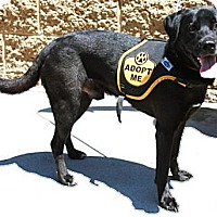 Adopt A Pet :: Sam - Gilbert, AZ