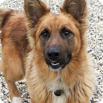 German Shepherd Dog Mix Dog for adoption in Sacramento, California - Chipper!