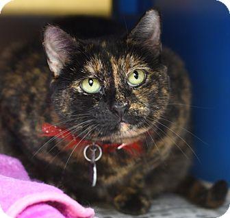 Calico Cat for adoption in Port Washington, New York - Joyce