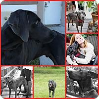 Adopt A Pet :: SAYLER - Inverness, FL