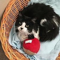 Adopt A Pet :: Sinks - Lander, WY