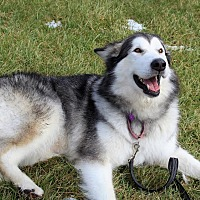 Adopt A Pet :: Kema - Augusta County, VA